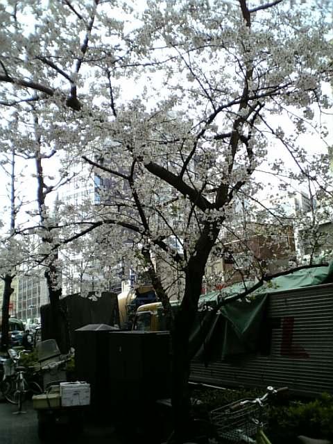 虎ノ門の春